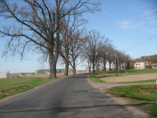 Wojewódzka Droga Śmierci Nr 242 Więcbork - Runowo bez chodnika i oświetlenia ulicznego - foto Tomasz Bracka