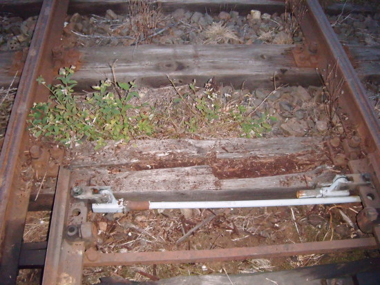Tak jak wyglądają tory na stacji PKP Więcbork na czynnej linii kolejowej NR 281 obraz nędzy i rozpaczy czas odchwaścić te dwa tory środkiem chemicznym by tego wiecznie nie kosić 24.09.2016r. !!! foto Tomasz Bracka