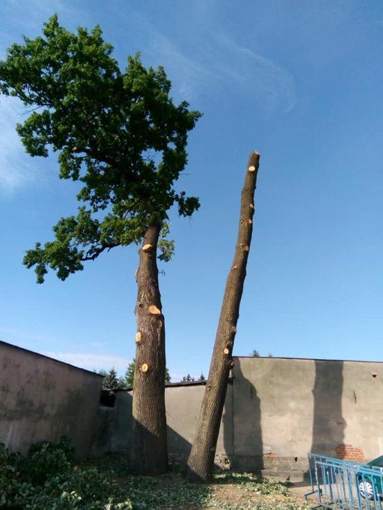 Tak władze miejskie Więcborka z burmistrzem i KPK dbają o pomniki przyrody w Więcborku ręce opadają - foto Tomasz Roman Bracka