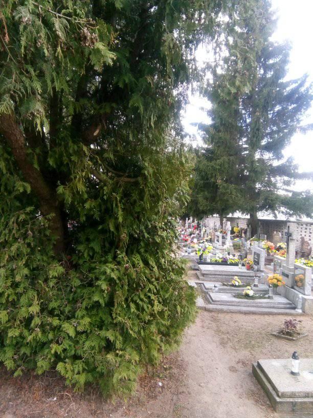 Bałagan, drzewa naalejach isypiący się płot naCmentarzu Komunalnym wWięcborku - foto Tomasz Roman Bracka